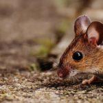 Animali in città: un ecosistema completo e perfetto
